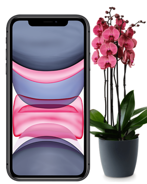 Bild von Apple iPhone 11 128GB Aktion